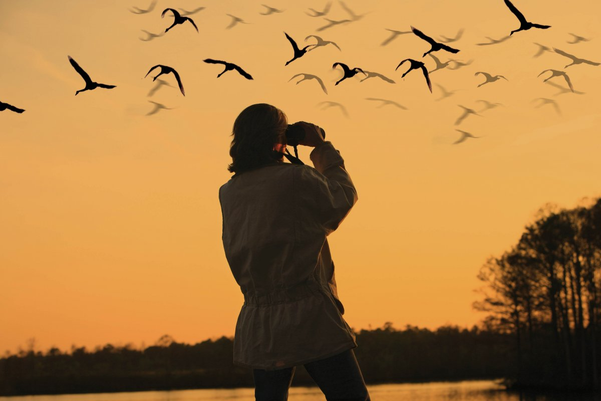 5-best-places-in-the-world-for-birding1_large