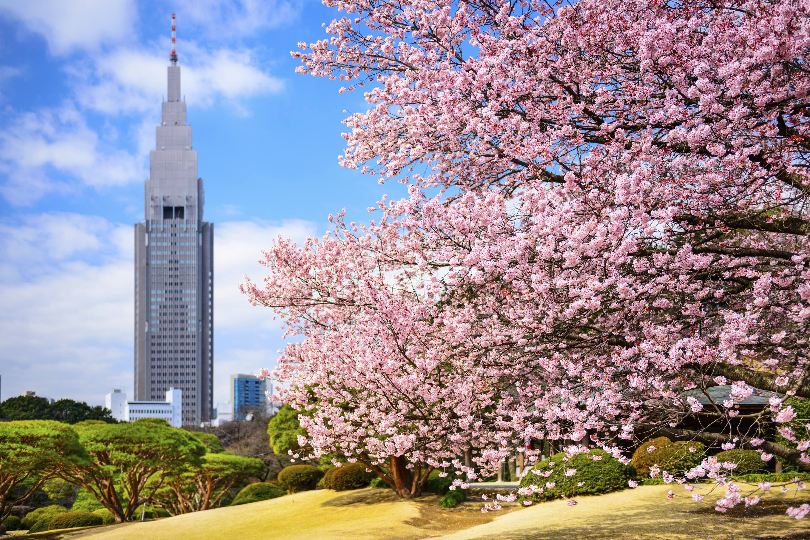 Tokyo Park in the Spring