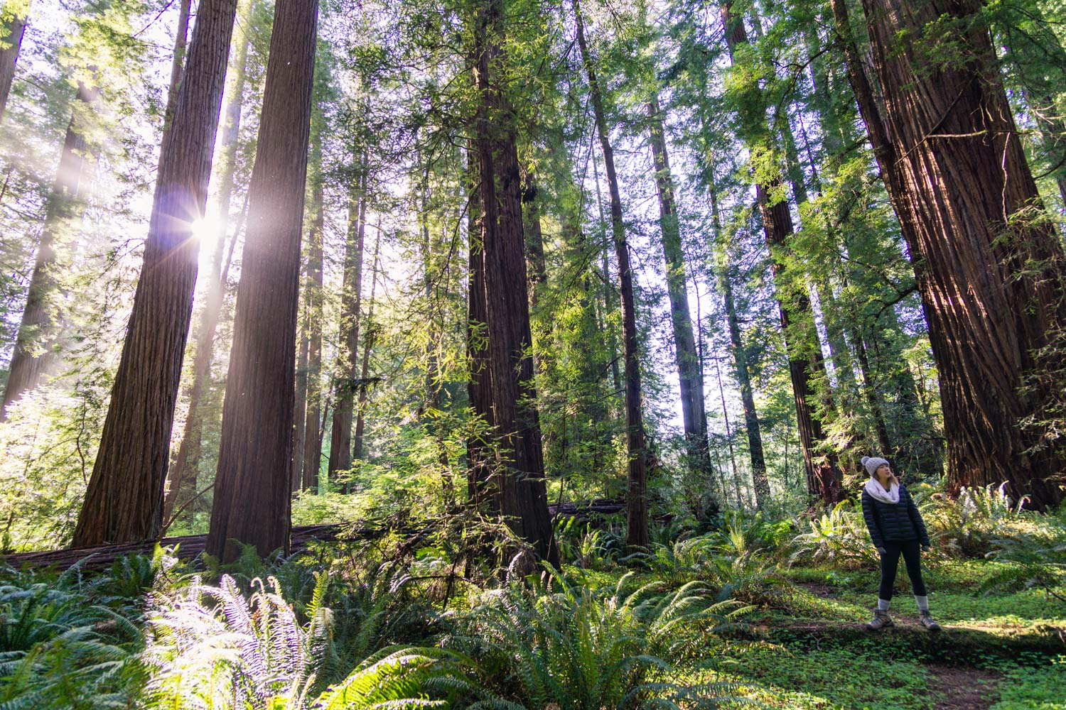 Jedediah Smith Redwoods National State Park, salah satu lokasi shooting film Bird Box