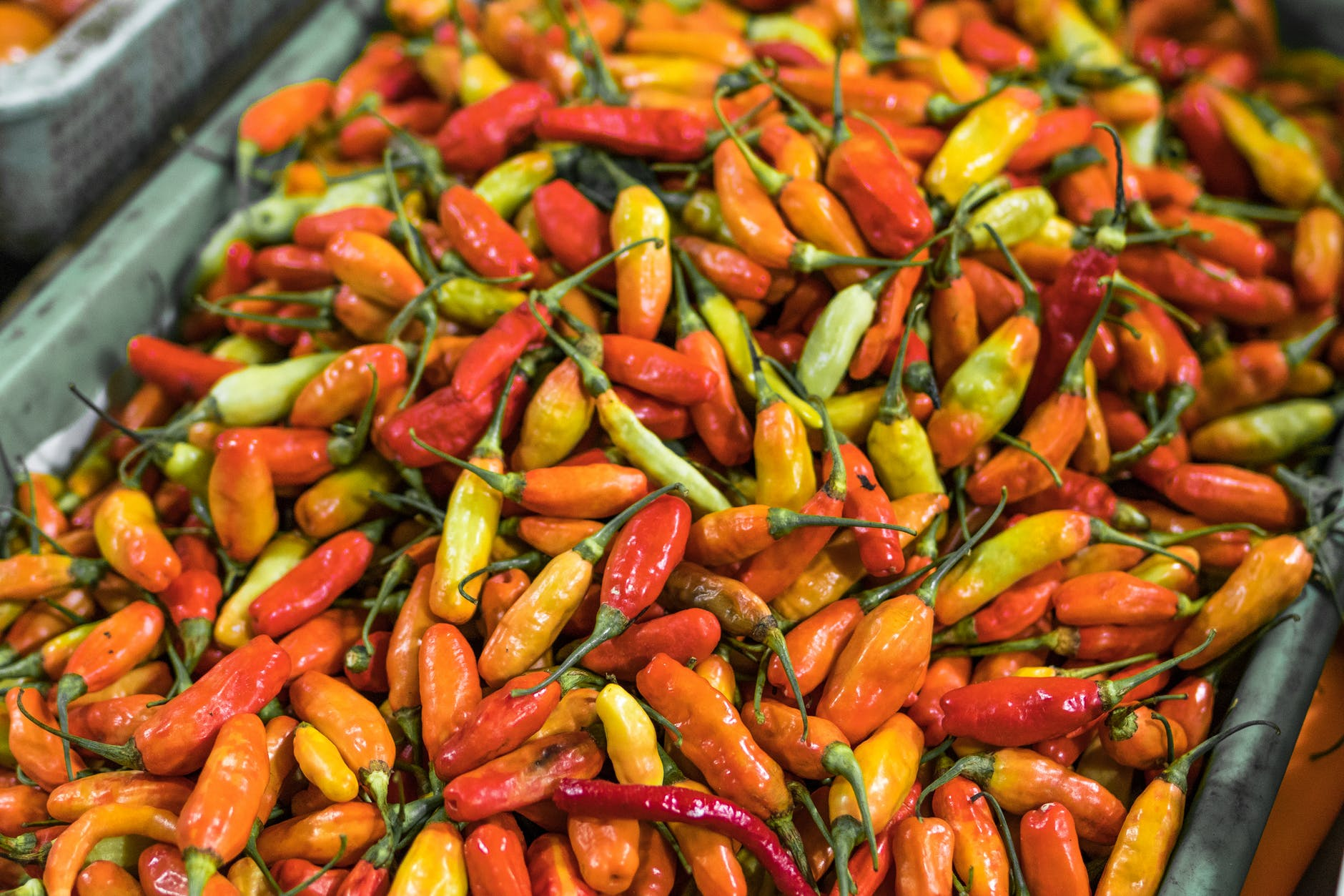 closeup photo of red and orange chilis
