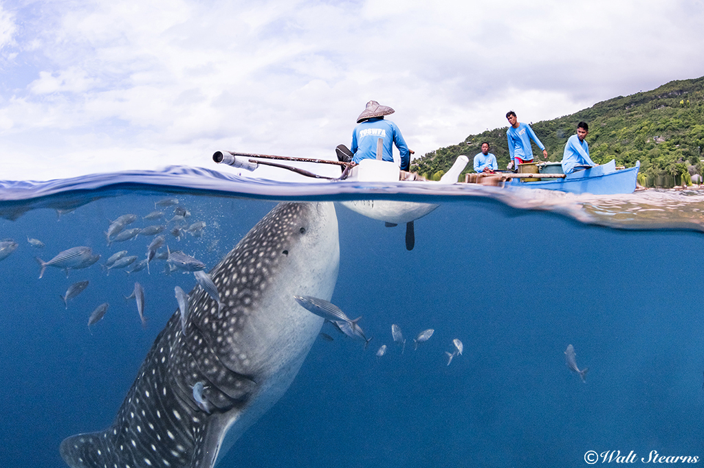 whale-shark-oslob-4 elitereaders.jpg